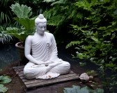 7742675-statue-of-buddha-on-wooden-platform-in-pool-surrounded-by-ferns